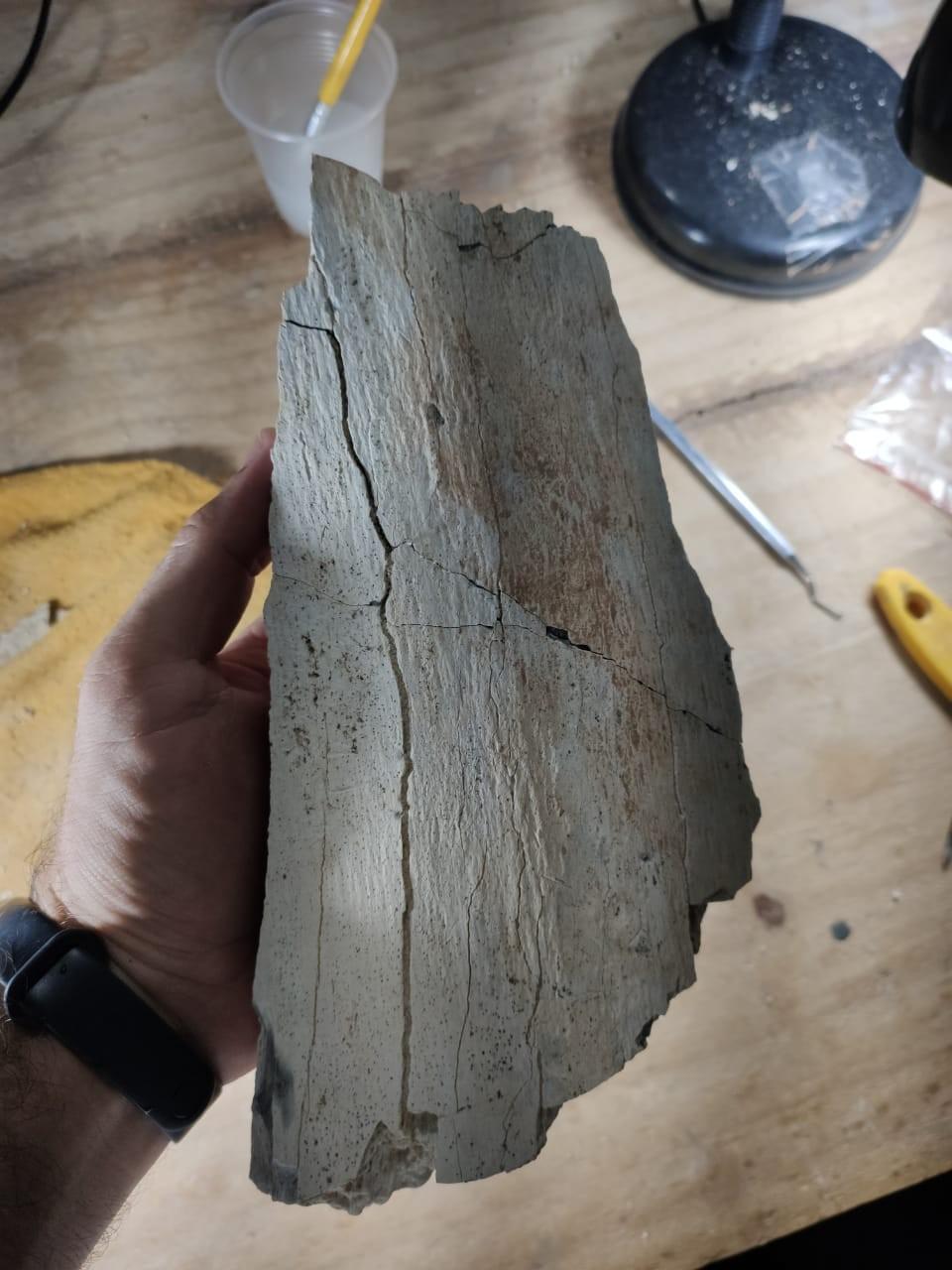 Trabalhadores encontram fósseis de dinossauros durante escavação de galeria em obras de construção de pedágio em rodovia