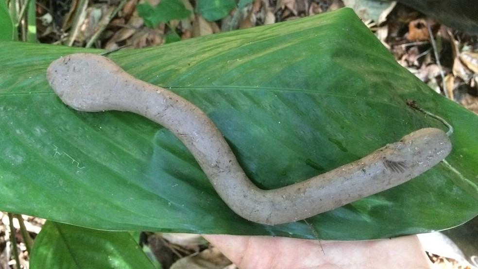 Pesquisadores concluíram que há menos predadores no Parque do Estado, permitindo que mais cobras cresçam — Foto: Leticia Monastero Delphino/Divulgação/BBC