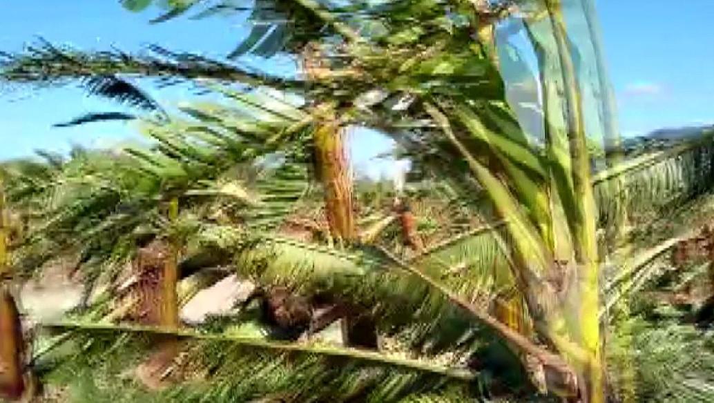 Ventos causam estragos na zona rural de Guaratuba