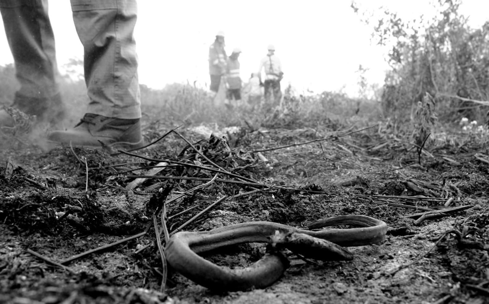 Pantanal, bioma mais preservado até 2018, perdeu ao menos 10 vezes mais área em 2020 que em 18 anos