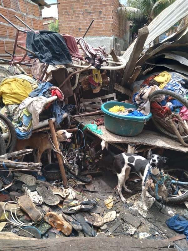 Sete cães em situação de maus-tratos são resgatados de casa de idosa pela polícia em Juazeiro do Norte, no Ceará