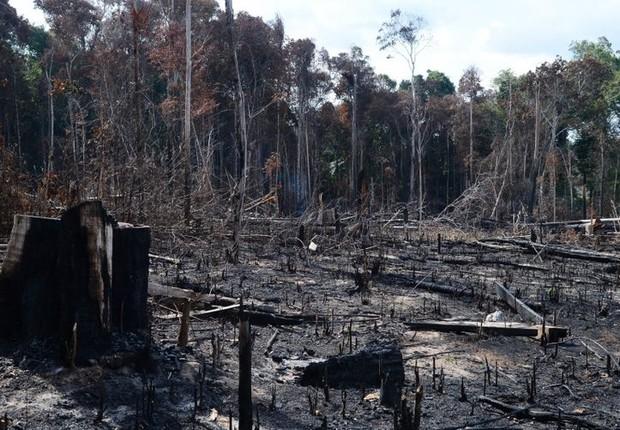 Desmatamento das florestas respondem pela principal fonte de emissão de gases de efeito estufa no país (Foto: Arquivo/Agência Brasil)