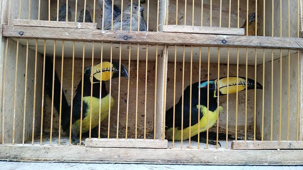 Entre as aves apreendidas no Mercado do Cordeiro, estão dois tucanos (Foto: Everaldo Silva/TV Globo)