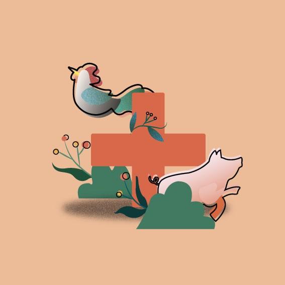 saúde animal (Foto: Felipe Yatabe)