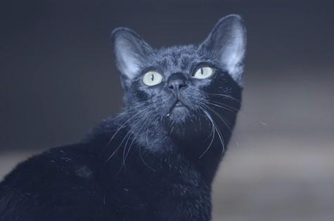 Gato Leon em 'O Sétimo Guardião' (Foto: Reprodução)