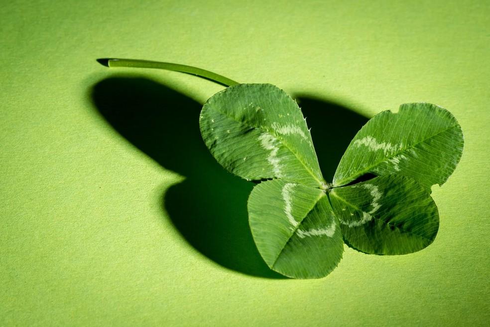 Trevo-de-quatro-folhas — Foto: BBC