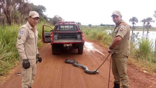Foto: (Corpo de Bombeiros de Mato Grosso/Divulgação)
