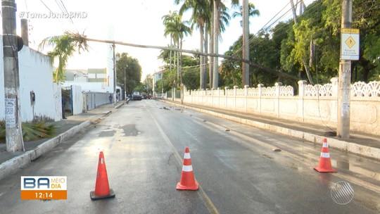 Palmeira cai sobre fios na Av. Luís Tarquínio em Salvador