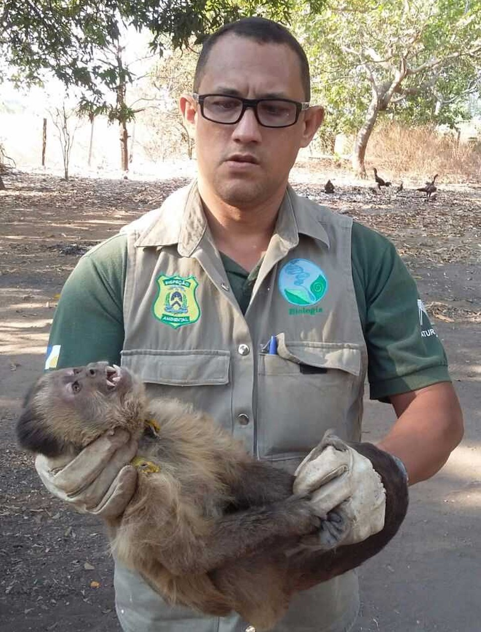 Macaco foi entregue ao Naturatins após morder menino (Foto: Divulgação/Naturatins)