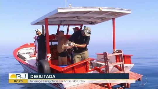 Tartaruga com dificuldade de nadar é resgatada no mar de Arraial do  Cabo, no RJ