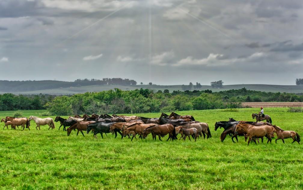 Criadores de cavalos estão otimistas quanto ao crescimento do mercado brasileiro — Foto: Felipe Ulbrich/Divulgação/ABCCC