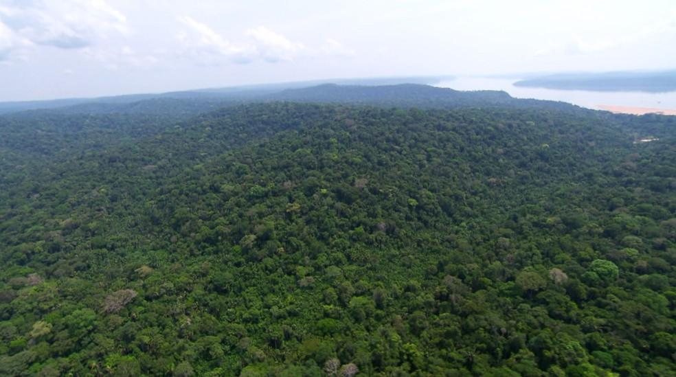 A floresta amazônica concentra 81% da disponibilidade de águas superficiais do País — Foto: Arquivo TG