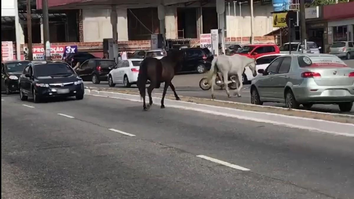 Cavalos soltos são flagrados no meio do trânsito em João Pessoa