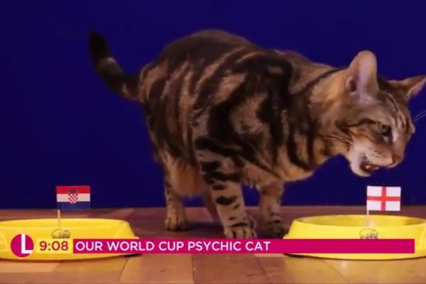 O gato vidente em sua escolha inicial pela Inglaterra na partida contra a Croácia (Foto: Twitter)