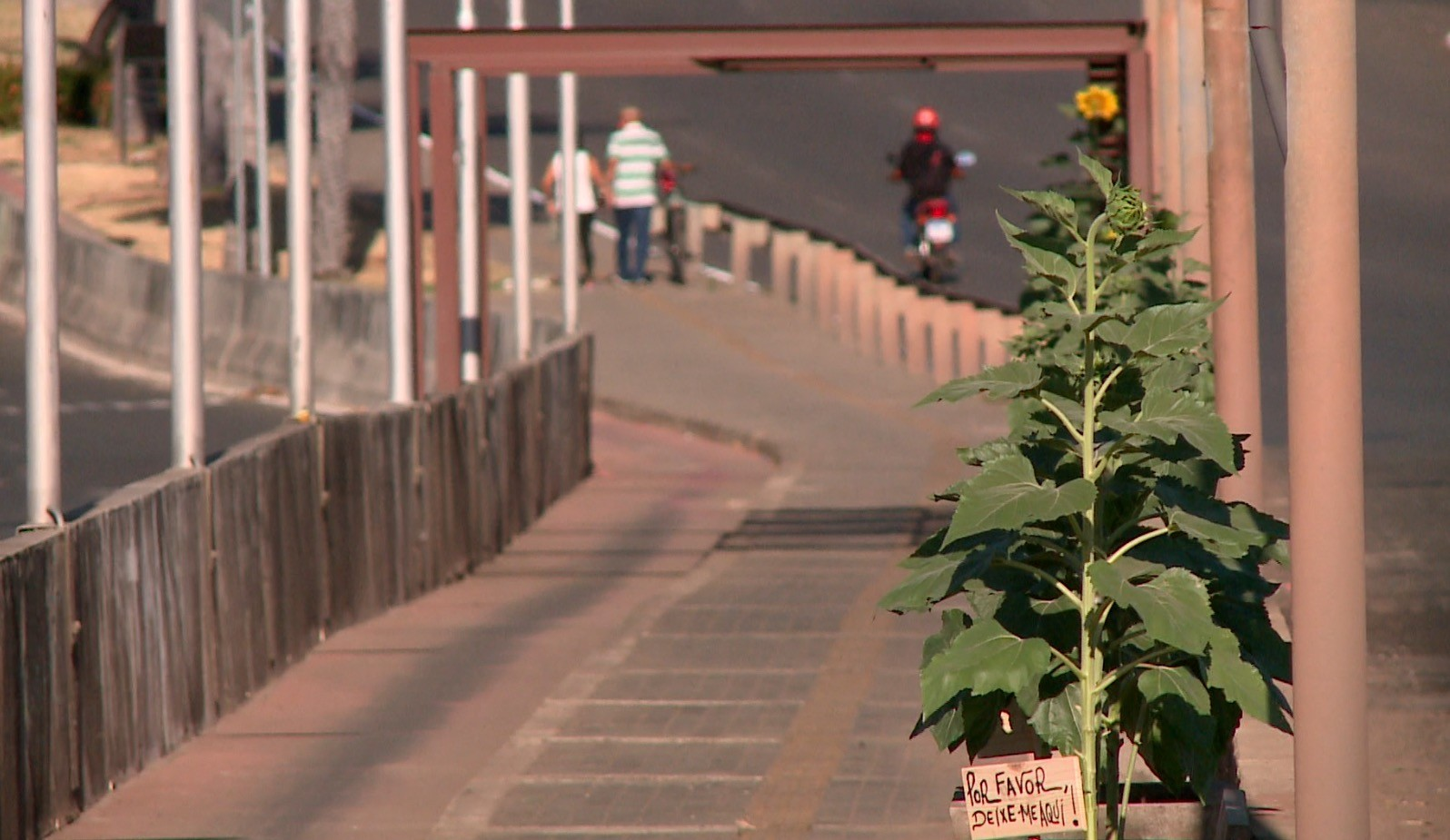 Sábado (26) e domingo (27) terão temperaturas de até 39°, no Piauí, com umidade entre 15% e 33%