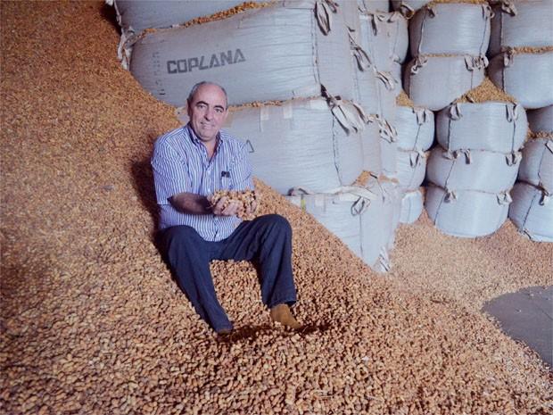 Walter Luiz de Souza colheu 6,25 toneladas de amendoim esse ano em Jaboticabal, SP (Foto: Adriano Oliveira/G1)