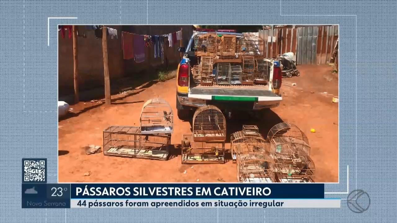 Cinco pessoas são detidas por manterem mais de 40 pássaros em cativeiros em cidades do Alto Paranaíba