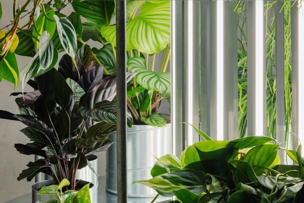 Floricultura em Copenhague enaltece as plantas como peças de arte (Foto: Irina Boersma/Divulgação)