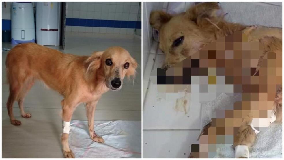 Lili recebeu alta após levar várias facadas em Santarém — Foto: Divulgação/Amavie