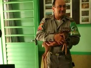 Animal foi resgatado por morador e entregue à Brigada Militar (Foto: Brigada Militar/Divulgação)
