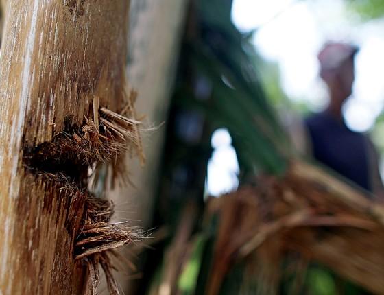 NO ALVO Sobrevivente mostra marcas de tiro num coqueiro atingido durante o massacre (Foto: Adriano Machado/Época)