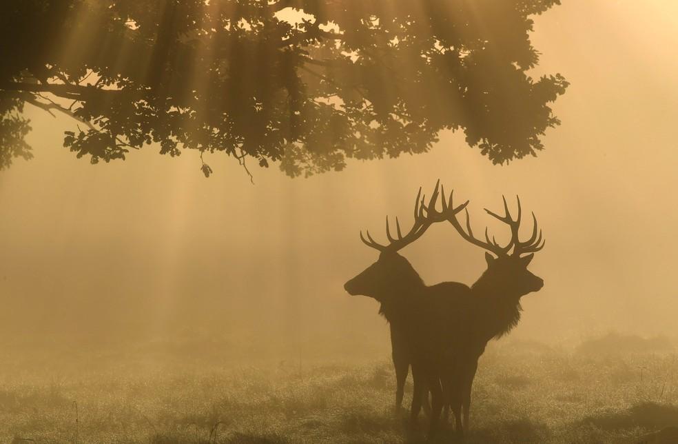 Galhada dos cervos pode chegar a pesar 18 kg — Foto: Toby Melville/Reuters