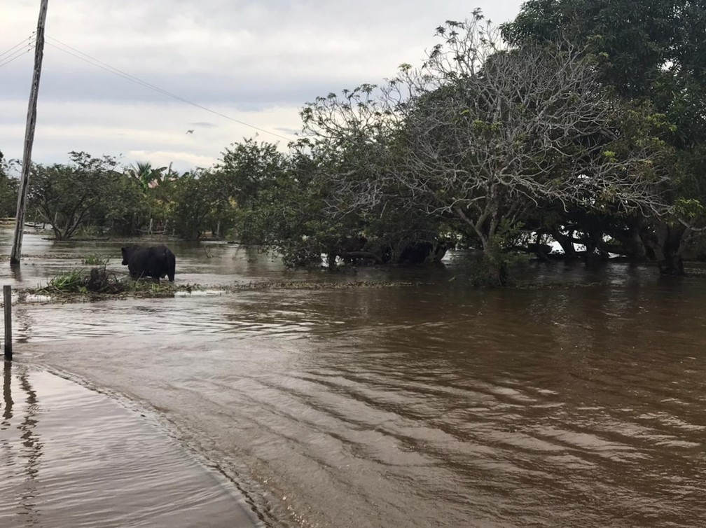 Cheia do Rio Solimões afeta Careiro da Várzea, na região metropolitana de Manaus — Foto: Jucélio Paiva/Rede Amazônica
