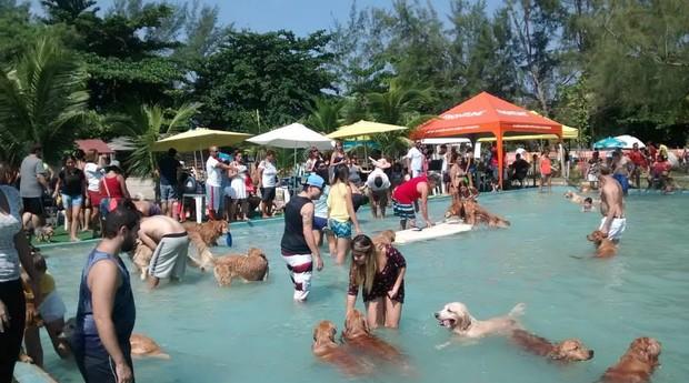 Clube do Totó recebe cerca de mil cães por mês (Foto: Divulgação)