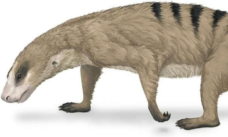 Um animal Therapsida, que é ancestral dos mamíferos atuais.  (Foto: Museu Field de História Natural de Chicago)