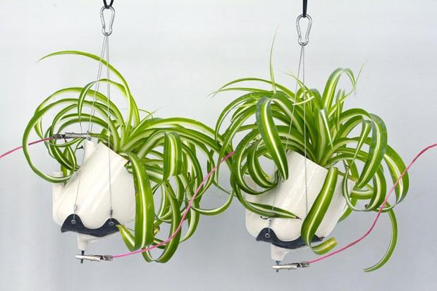 Instalação com plantas usa fotossíntese para gerar energia elétrica (Foto: Reprodução)