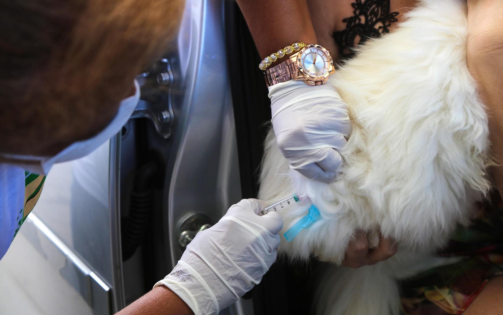 Campanha de vacinação antirrábica em bairros de Feira de Santana termina no sábado; confira