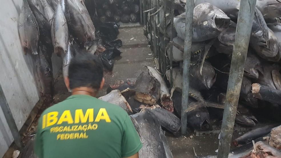 Três toneladas de agulhões negros foram apreendidas na Zona Leste de Natal — Foto: Ibama