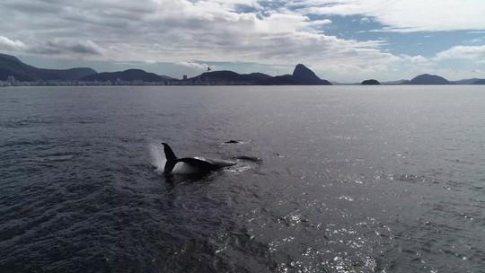 Baleias são vistas na costa do Rio