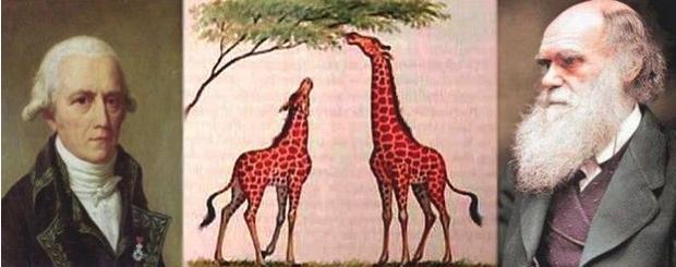 Pensamentos diferentes sobre pescoço das girafas (Foto: Reprodução/Aura Celeste)