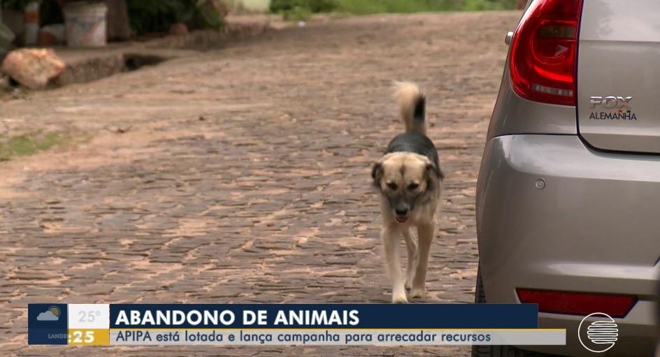 Manaus tem aumento nas denúncias por abandono de animais, alerta polícia