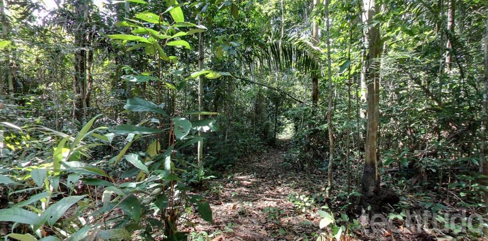 Pesquisadores criaram drones capazes de mapear a biomassa das florestas — Foto: Reprodução/Barbara Mannara