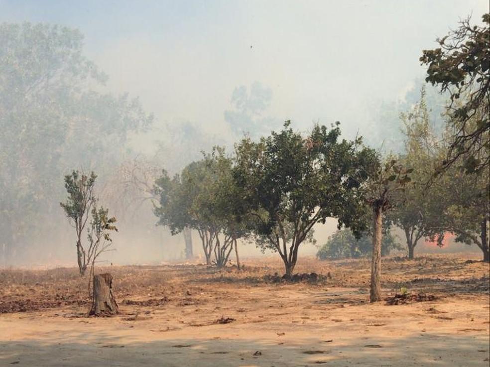 Queimada atingiu propriedades rurais em Alvorada  — Foto: Thainara Pimentel/Divulgação