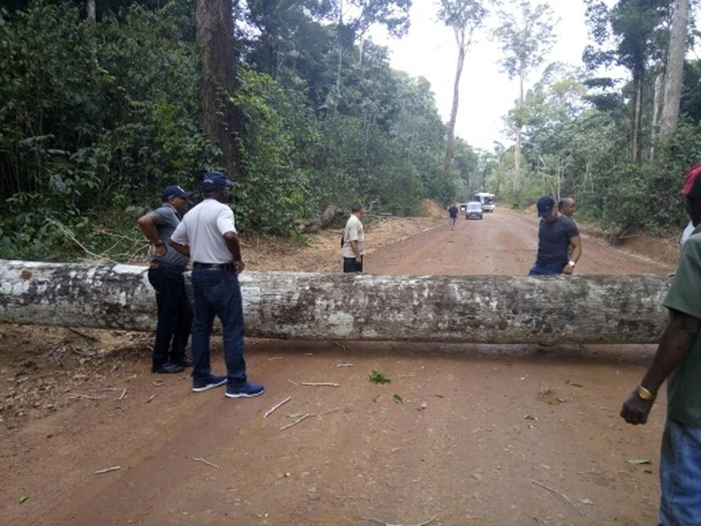 -  Árvore bloqueou trecho da BR-156, em Laranjal do Jari  Foto: Jamil Abdala/Tô na Rede