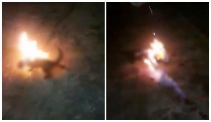Homem diz à polícia que ateou fogo em gato vivo após ser arranhado pelo animal