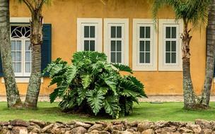 Plantas nativas do Brasil para você ter em casa