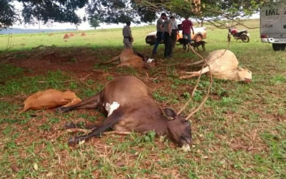Fazendeiro e animais morrem após raio em fazenda de Quirinópolis — Foto: Reprodução/PM