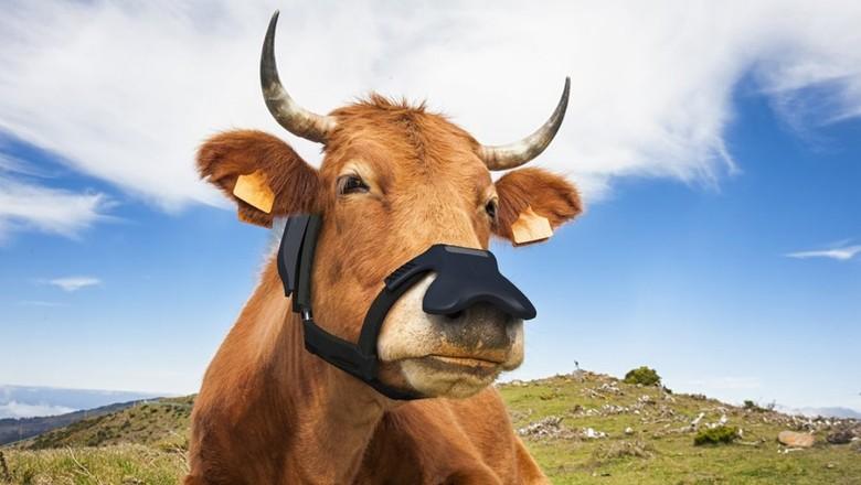Máscara anti-metano para vacas (Foto: Zelp/Divulgação)