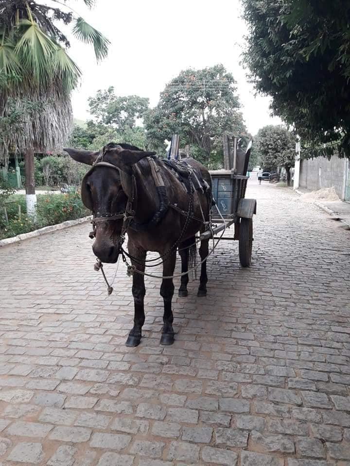 Mula é aposentada após anos trabalhando para a Prefeitura de Leopoldina