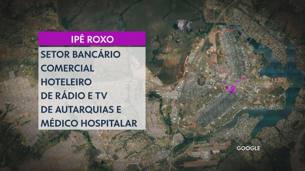 Projeto Zona Verde do DF Ipê Roxo — Foto: TV Globo/Reprodução