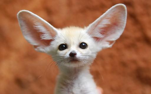 Dia Mundial dos Animais: 10 espécies diferentonas que (provavelmente) você nem sabe que existiam
