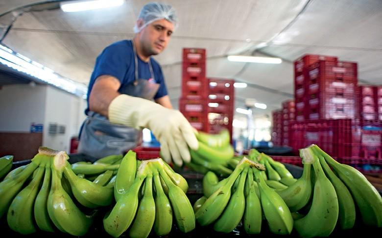 Processo de lavagem e seleção das frutas na Bananas Corrêa (Foto: Emiliano Capozoli/Ed. Globo)