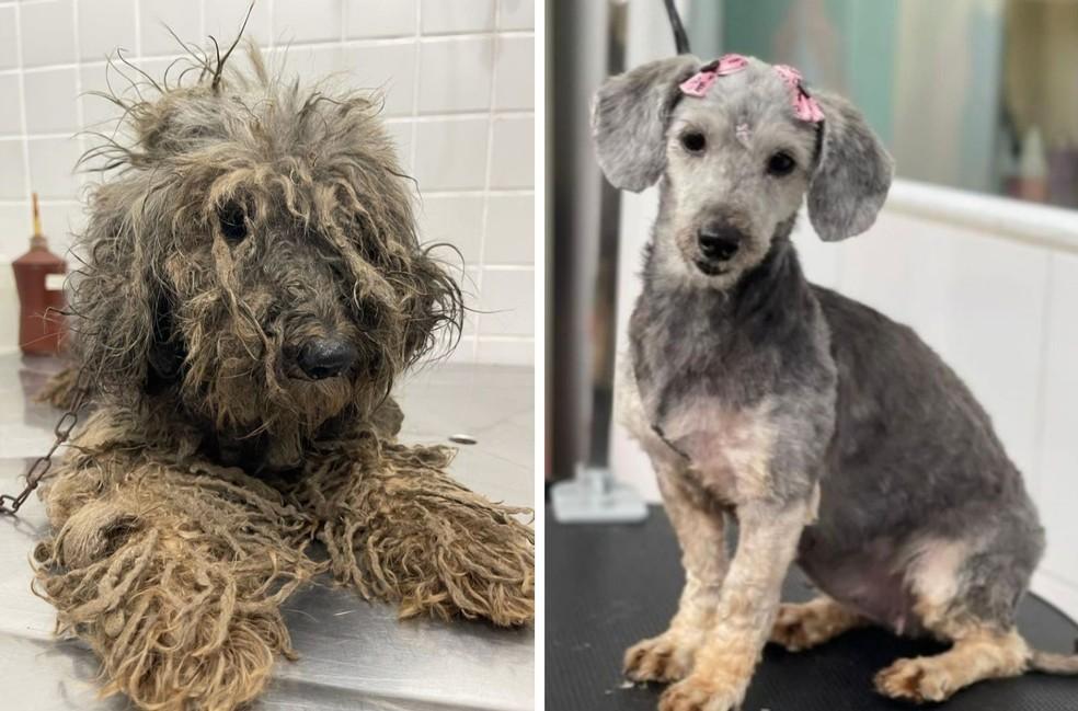 Redes sociais feitas para mostrar a recuperação da cadela mostram antes e depois impressionante, em Santos, SP — Foto: Reprodução/Instagram
