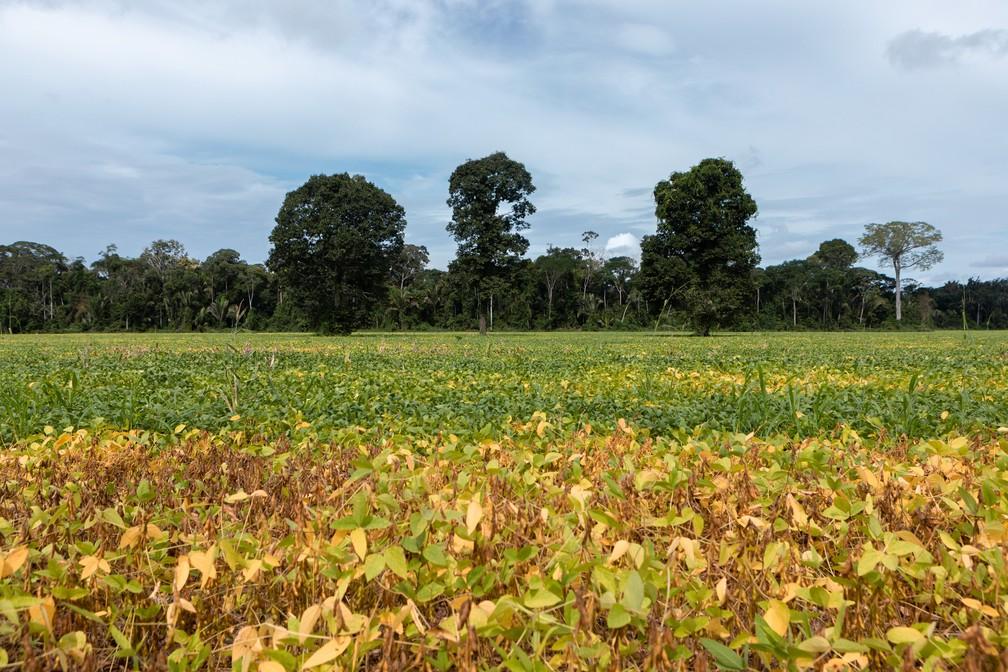 A mudança do uso da terra é a principal causa das emissões de dióxido de carbono no Brasil. Os biomas Amazônia e Cerrado respondem por 54% delas entre 1990 e 2015. — Foto: Marcelo Brandt/G1