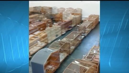 Onze são presos por tráfico de animais silvestres em cidades de MG