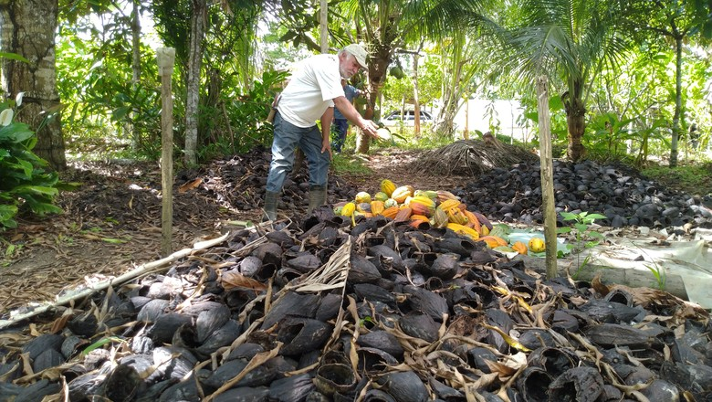 cogumelo-cacau-rio-engenho (Foto: Cleyton Vilarino/Ed. Globo)
